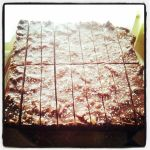 choco biscuit cake 2
